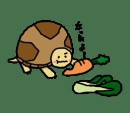 tortoises sticker #926436