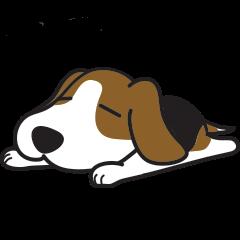 Porjai Beagle Dog