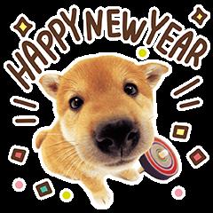 สติ๊กเกอร์ไลน์ THE DOG สวัสดีปีใหม่โฮ่งๆ