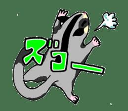 I love Sugar Glider sticker #953670