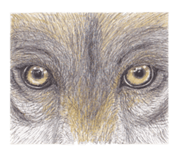 Wolf's song(1) sticker #993666