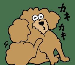 Funny poodle like a human. sticker #1005035