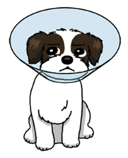 Daily life of Shih Tzu sticker #1019498