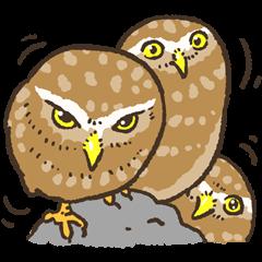 Raptors sticker (Owl,Eagle,Hawk,etc.)