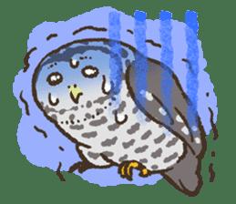 Raptors sticker (Owl,Eagle,Hawk,etc.) sticker #1022461