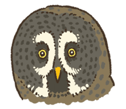 Raptors sticker (Owl,Eagle,Hawk,etc.) sticker #1022466