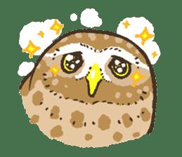 Raptors sticker (Owl,Eagle,Hawk,etc.) sticker #1022476