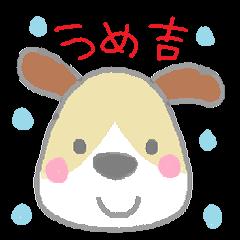 puppy Umekichi