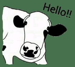 The cows sticker #1074426