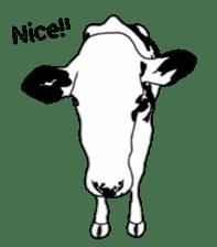 The cows sticker #1074427
