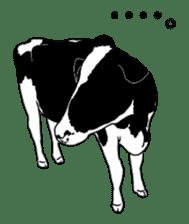 The cows sticker #1074442