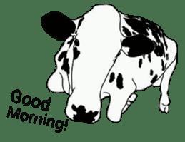 The cows sticker #1074444