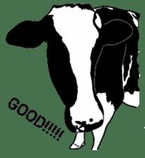 The cows sticker #1074445