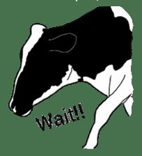 The cows sticker #1074446