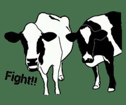 The cows sticker #1074448