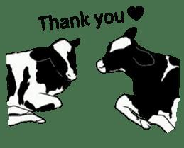 The cows sticker #1074458