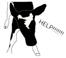 The cows sticker #1074460