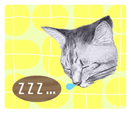 My cat Tama's stickers [For English] sticker #1078441