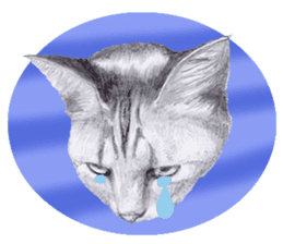 My cat Tama's stickers [For English] sticker #1078464