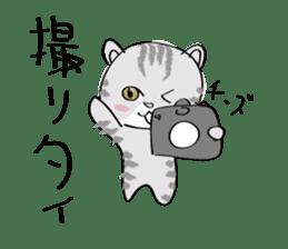 "cat ""tiger"" sticker #1109231"