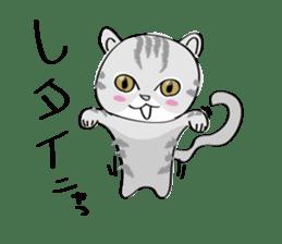 "cat ""tiger"" sticker #1109235"