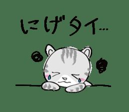 "cat ""tiger"" sticker #1109238"