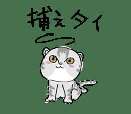 "cat ""tiger"" sticker #1109239"
