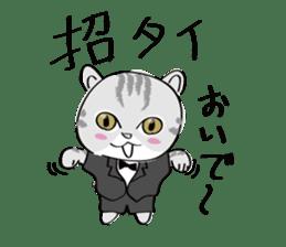 "cat ""tiger"" sticker #1109254"