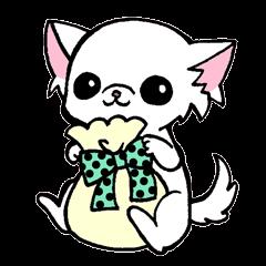 mamechiyo of Chihuahua