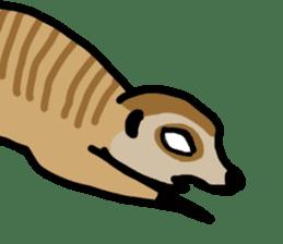 Meerkat sticker #1166711
