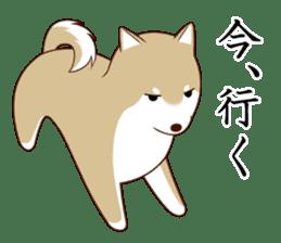 white pomeranian and puppies sticker #1175384