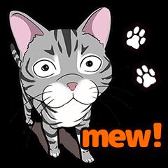 Cat American Shorthair(English ver.)