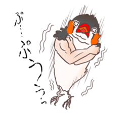 Muscle zebra finch And Friends sticker #1205205