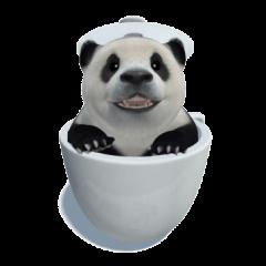 The Master Panda
