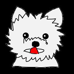 Yorkie-chan