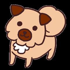 Michael is a hybrid dog living in Hakata