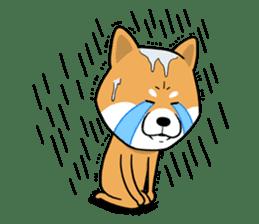 The Dogs - Shiba Inu 'Rui' sticker #1322259