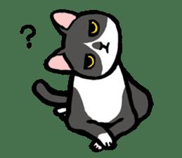 CATS!? sticker #1326197