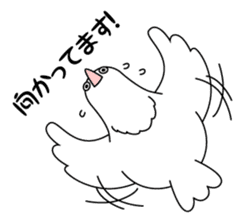 White dove sticker #1327918