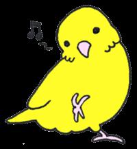 my-little-bird