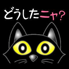 Black cat ROKU