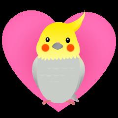 Lovely & Cute Cockatiels!