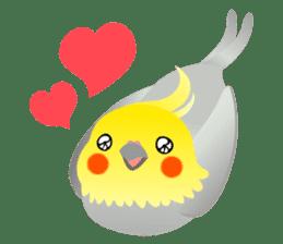 Lovely & Cute Cockatiels! sticker #1368042