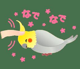 Lovely & Cute Cockatiels! sticker #1368043