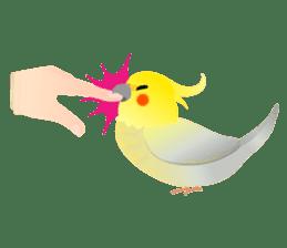 Lovely & Cute Cockatiels! sticker #1368044