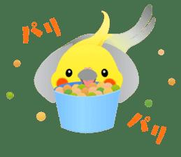 Lovely & Cute Cockatiels! sticker #1368046