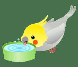 Lovely & Cute Cockatiels! sticker #1368047