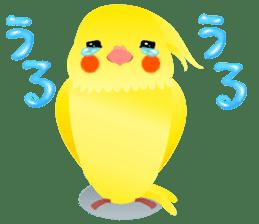 Lovely & Cute Cockatiels! sticker #1368049