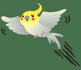 Lovely & Cute Cockatiels! sticker #1368051