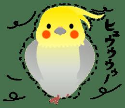 Lovely & Cute Cockatiels! sticker #1368057